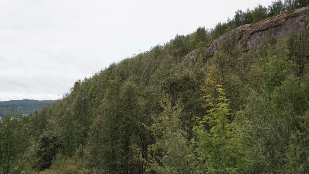 forest, bioproduct, material, sustainability